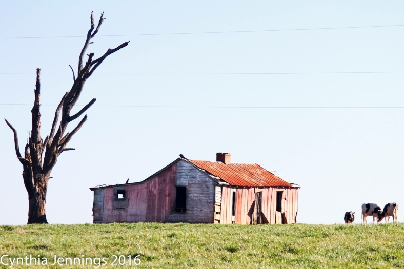 Eatonton Farmhouse-2948